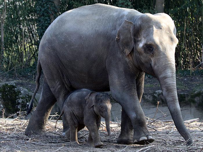 Tierpark Hagenbeck Hamburgs Tierisches Original
